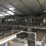 Presorting and Packing Line for Round Fruit